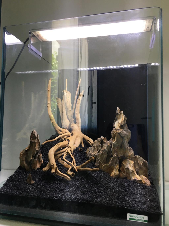 Premier aquarium, Nano 30L pour Néocaridina 611