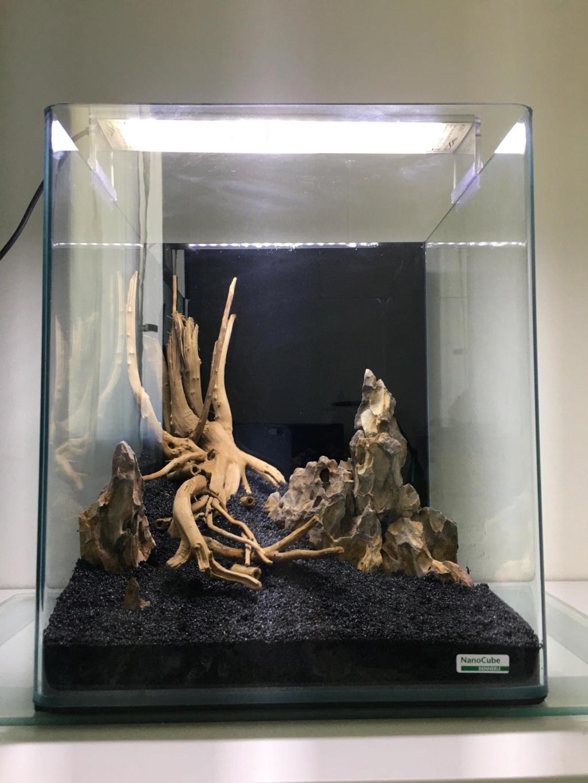 Premier aquarium, Nano 30L pour Néocaridina 810