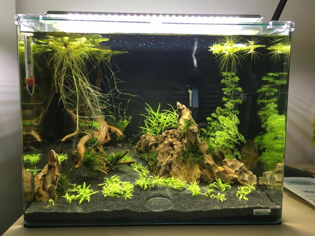Premier aquarium, Nano 30L------>55L  pour Néocaridina New_5410