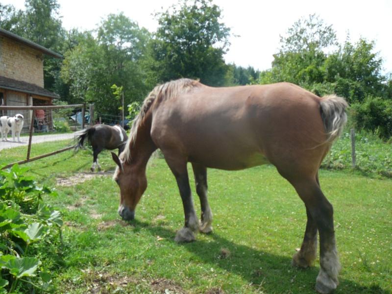 VIOLETTA - Trait Comtois née en 1987 - adoptée en janvier 2011 par Delphine P1010127