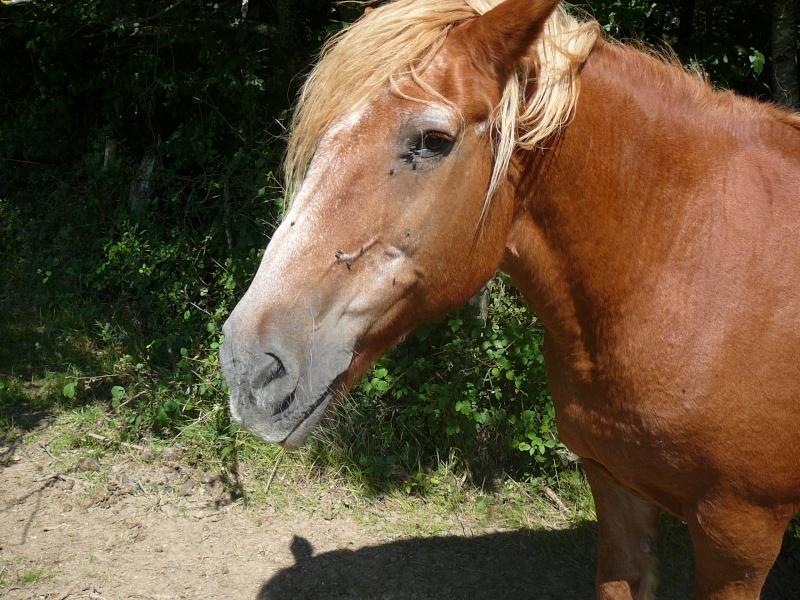 RAVENA - ONC trait née en 1983 - adopté en nçvepmbre 2010 par Cheyenne P1010130