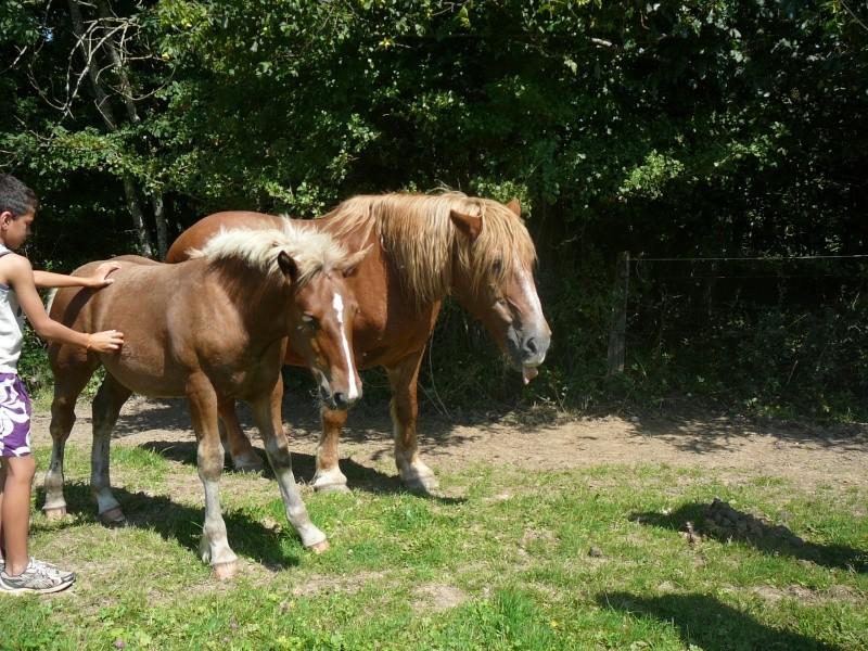 RAVENA - ONC trait née en 1983 - adopté en nçvepmbre 2010 par Cheyenne P1010131