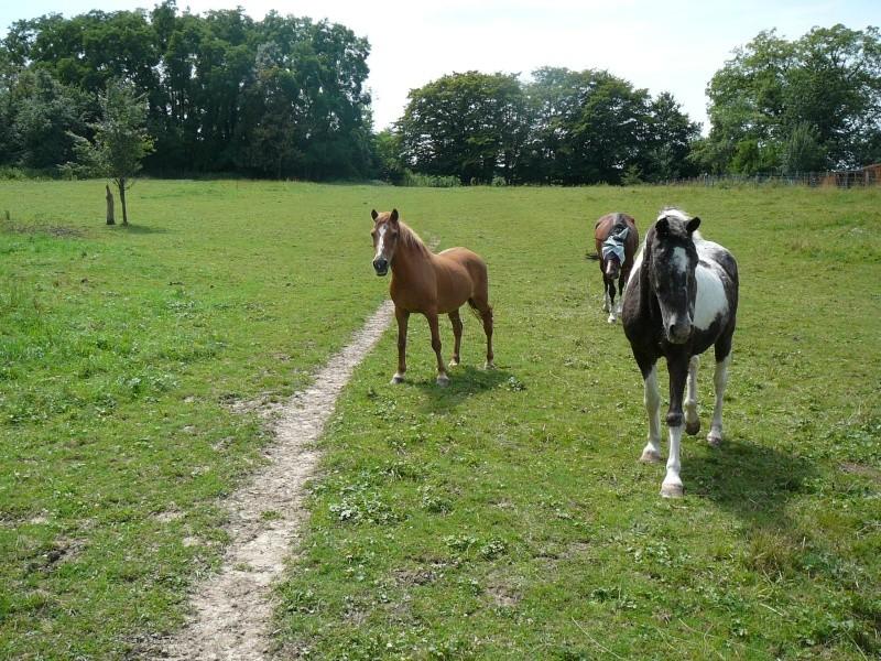 QUETZAL - ONC poney née en 1982 - adoptée en janvier 2011 par Mélanie P1010134