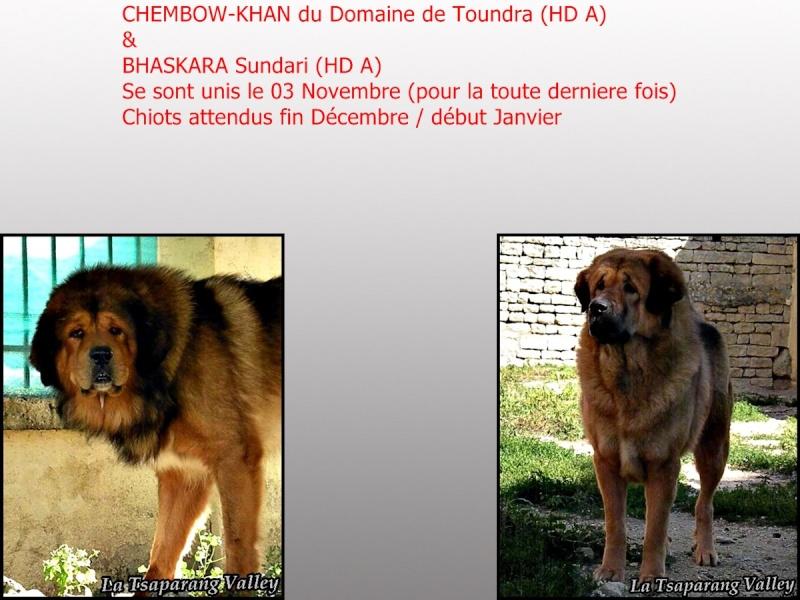 Chiots Dogue du Tibet a la Tsaparang Valley (ou quand tout va mal !!!) Montag12