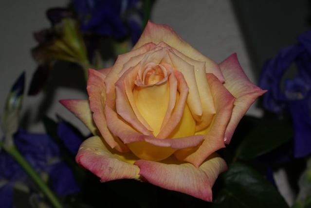 les fleurs de mon jardin  - Page 2 Mai_2024