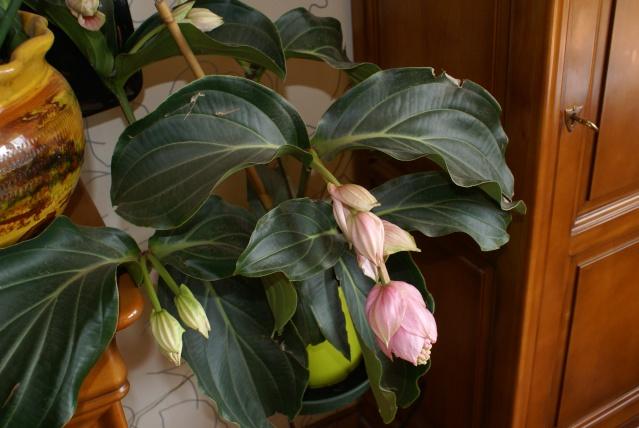 les fleurs de mon jardin  - Page 2 Mai_2034