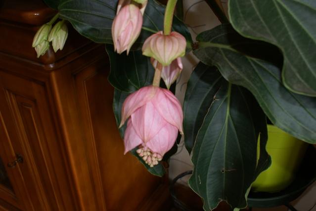 les fleurs de mon jardin  - Page 2 Mai_2035