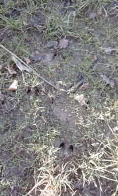 pieds,traces et indices Image110