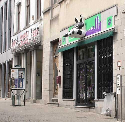 Bouledogue Dsc01536