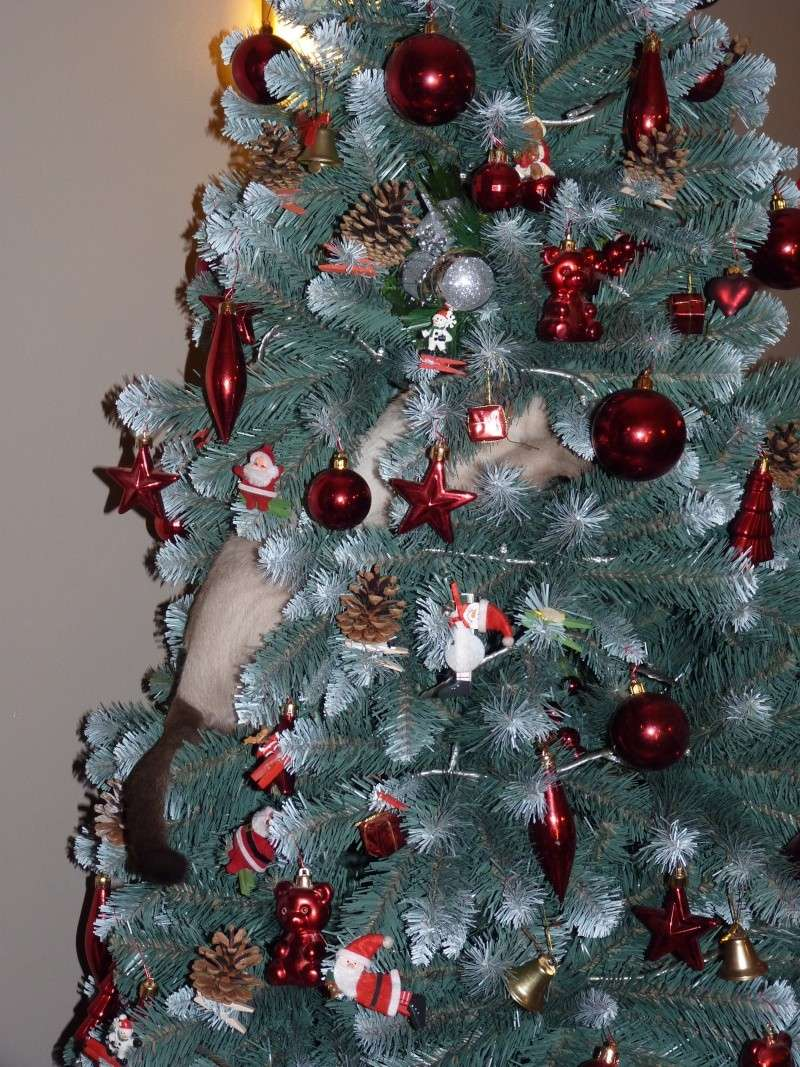 Spécial Photos :  Noël 005_310