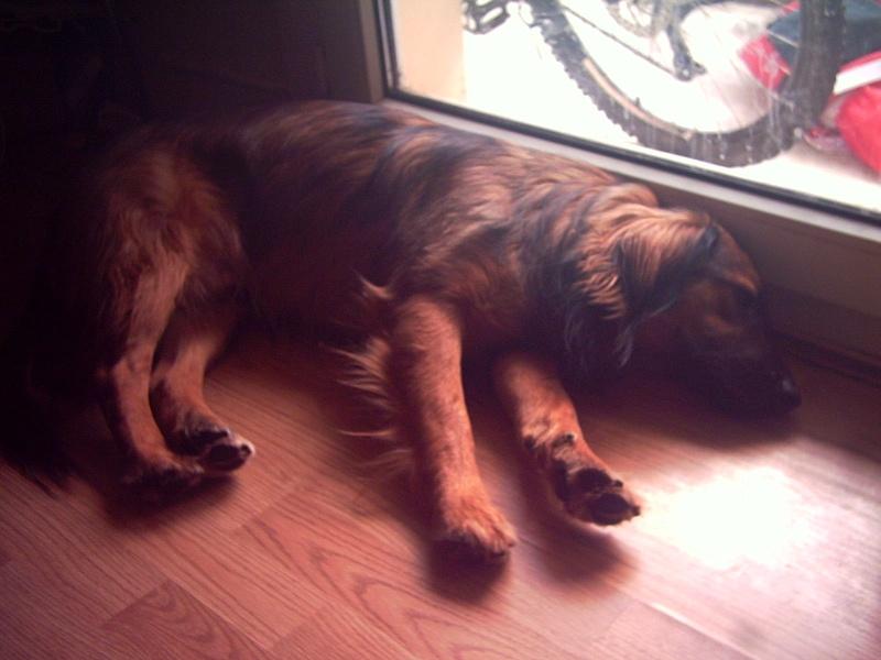 alf un amour de chien Pict0010