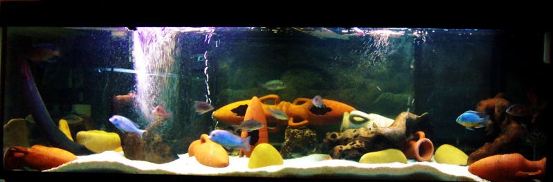 Aquarium 600 litres de tyrano34 100_8110
