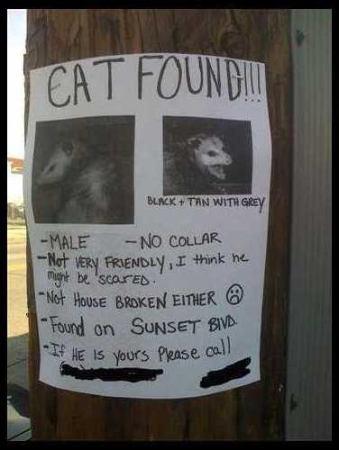I Found Your Cat! Cat_fo10