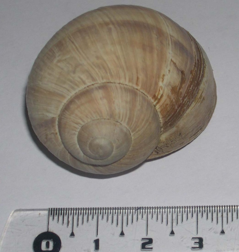 escargot Dscn5510