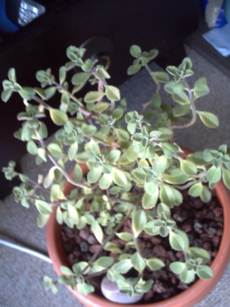 identification de plantes tropicales Plante14
