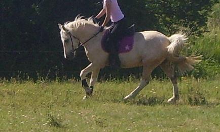 Savoir si son cheval est bien en place Imgp2610
