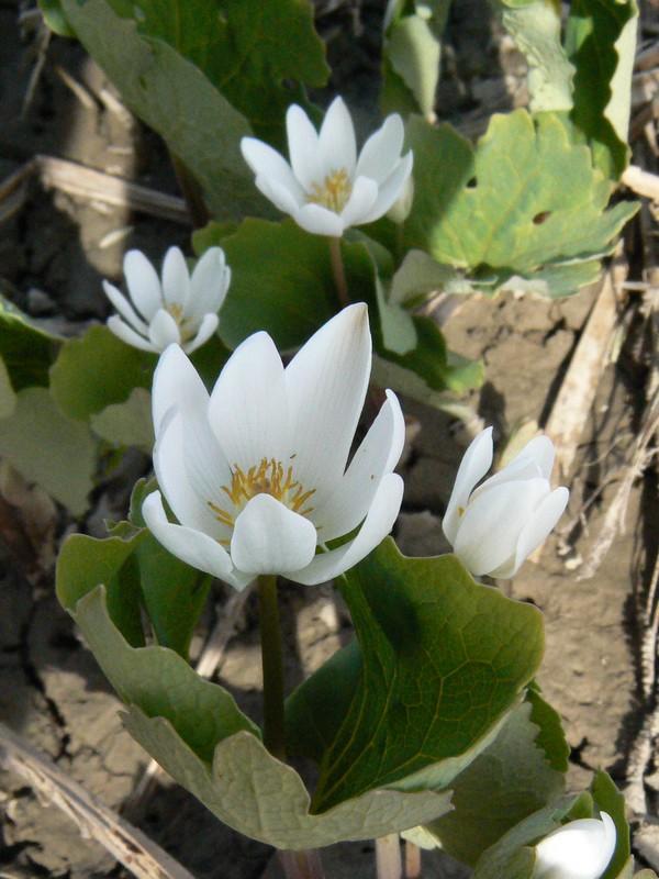 Ballade sur le bord de la rivière! Fleur_10