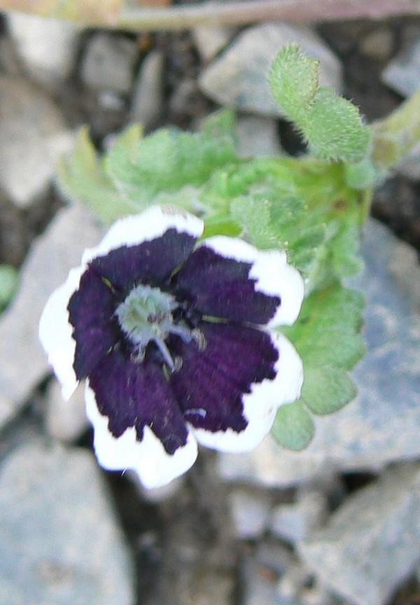 Fleurs de juillet P1120612