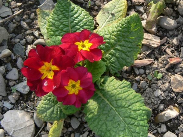 Fleurs de juillet P1120619