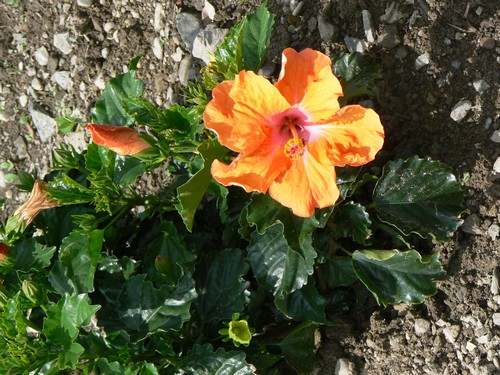 Fleurs de juillet P1120815