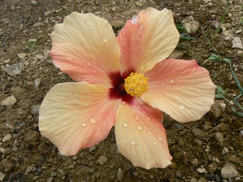 Fleurs de juillet P1120917