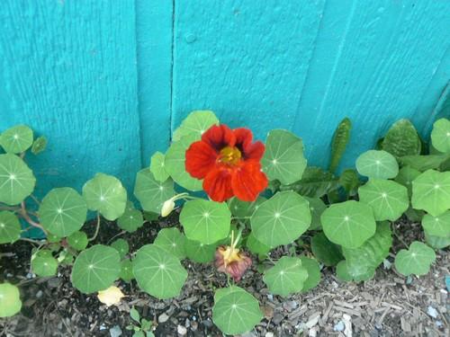 Fleurs de juillet P1130310