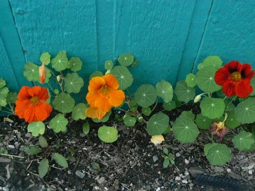 Fleurs de juillet P1130311