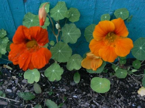 Fleurs de juillet P1130312