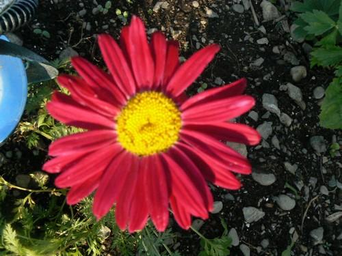 Fleurs de juillet P1130313