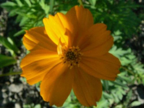 Fleurs de juillet P1130415