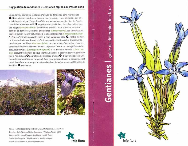 Gentianes / guide de détermination N°1 Gentia10
