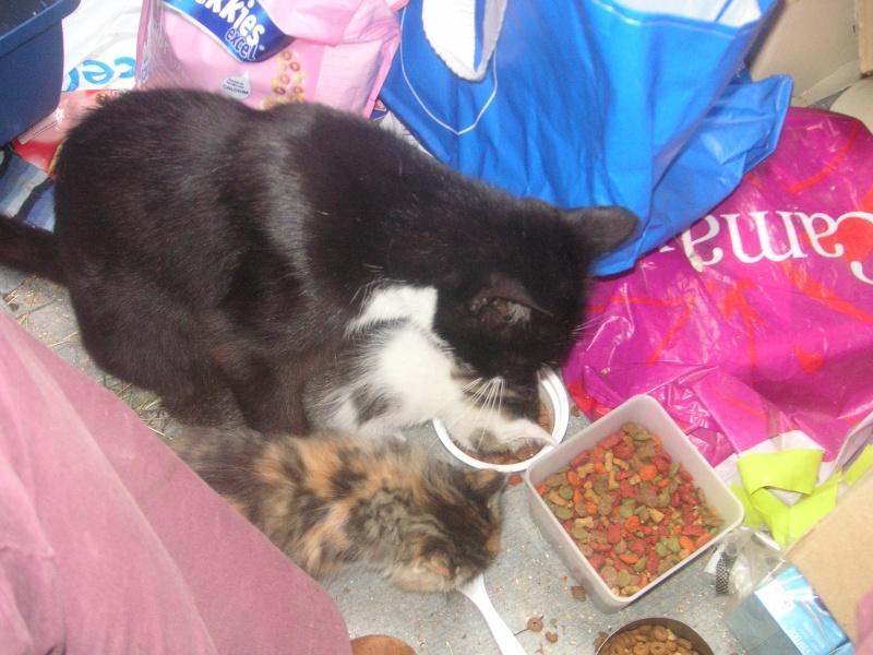 Donne chatons, placés, post à fermer SVP Pict1913