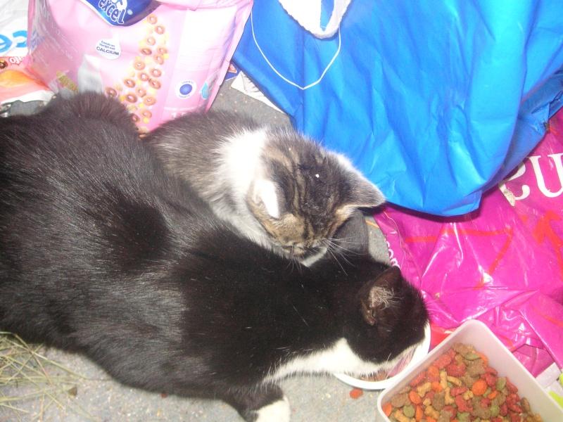 Donne chatons, placés, post à fermer SVP Pict1914