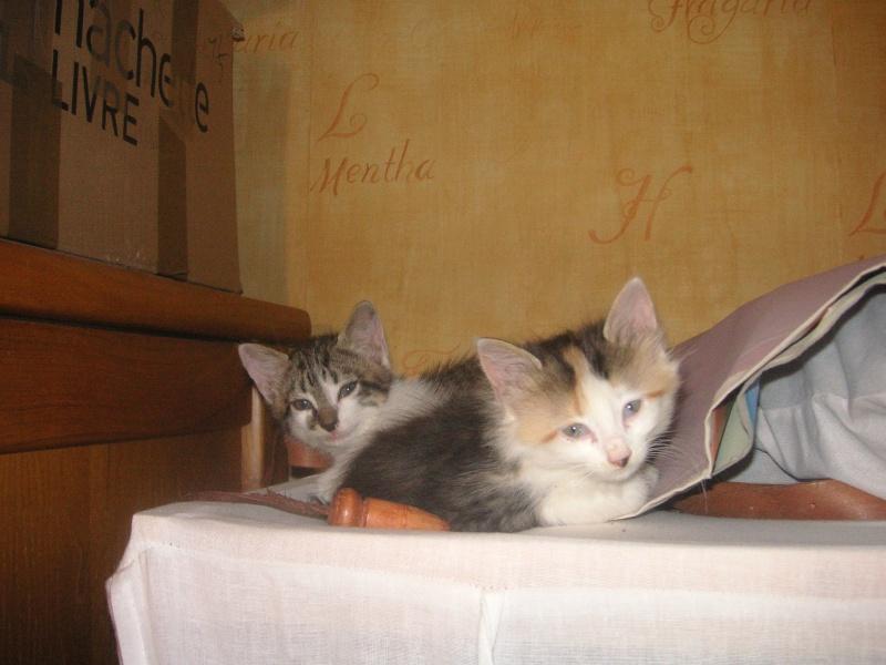 Donne chatons, placés, post à fermer SVP Pict1922