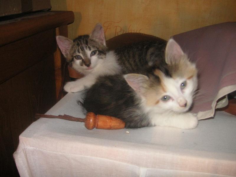 Donne chatons, placés, post à fermer SVP Pict1923