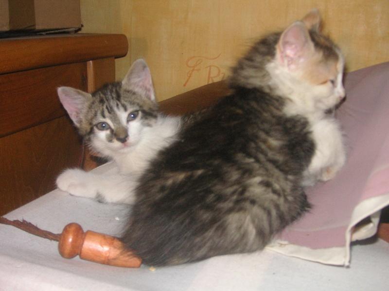 Donne chatons, placés, post à fermer SVP Pict1925