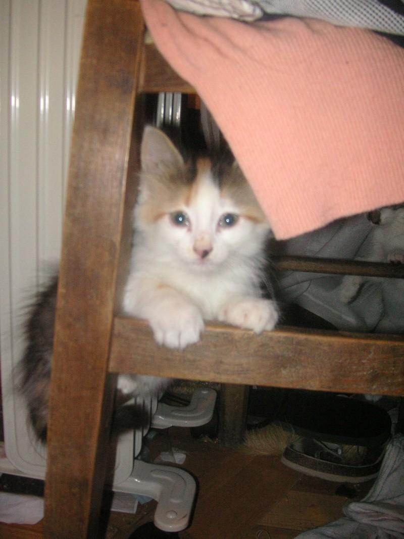 Donne chatons, placés, post à fermer SVP Pict1929