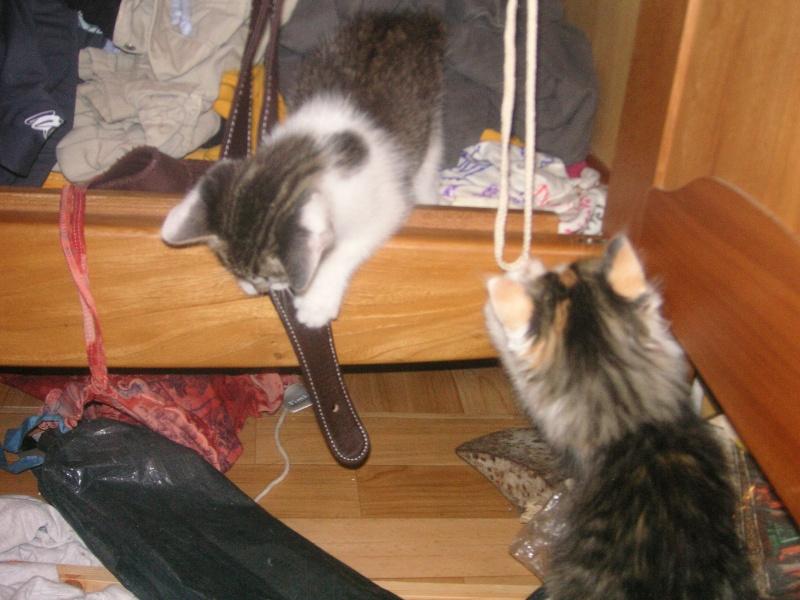 Donne chatons, placés, post à fermer SVP Pict1931