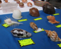 photos expo coquillages Bourse13
