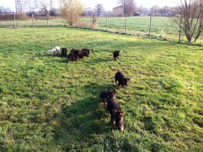 5 femelles et 3 mâles sont nés le 30/01/2012  au Val de la Petite Creuse - Page 2 Img_0916