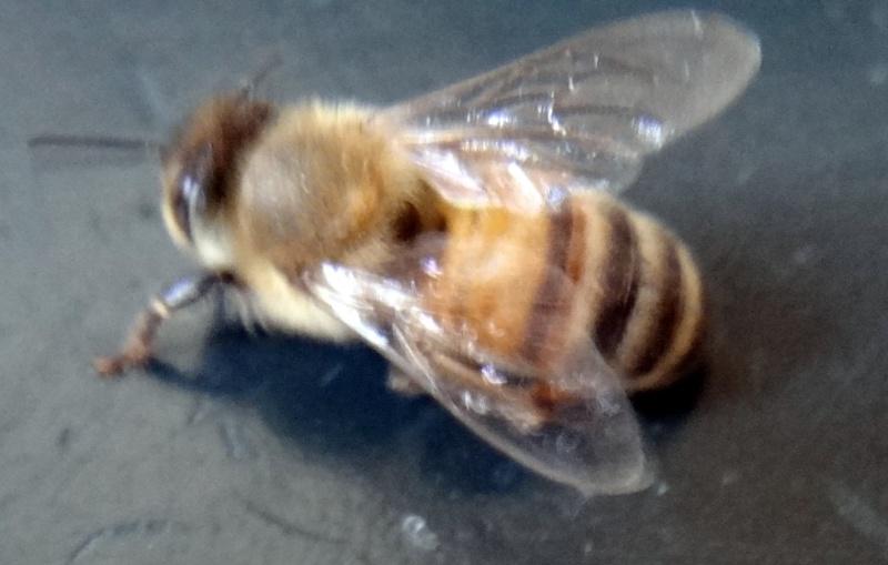 [post déplacé] Grosse mouche? Dsc04012