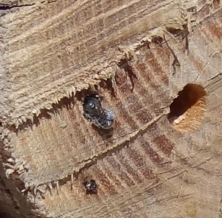 [post déplacé] Grosse mouche? Dsc04014