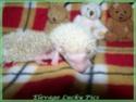 Les BB de Saphira auront 6semaines dans 2j(news+photos p9) - Page 5 Photo_21
