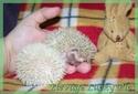 Les BB de Saphira auront 6semaines dans 2j(news+photos p9) - Page 5 Photo_28
