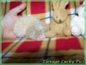 Les BB de Saphira auront 6semaines dans 2j(news+photos p9) - Page 5 Photo_33