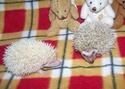Les BB de Saphira auront 6semaines dans 2j(news+photos p9) - Page 5 Photo_38