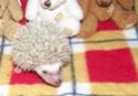 Les BB de Saphira auront 6semaines dans 2j(news+photos p9) - Page 5 Photo_39