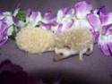 Les BB de Saphira auront 6semaines dans 2j(news+photos p9) - Page 6 Photo_48