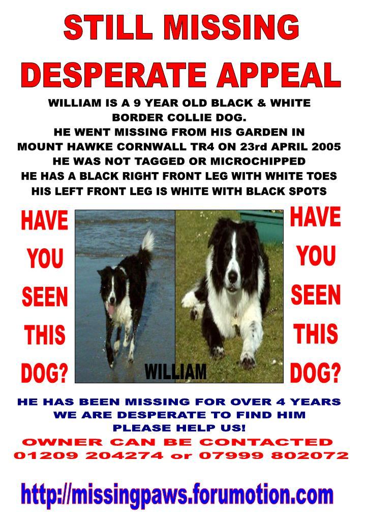 William Border Collie Cornmwall TR4 Poster New_wi10
