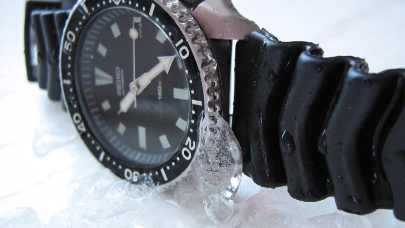 L'age de glace 3... (diver inside) Img_5923